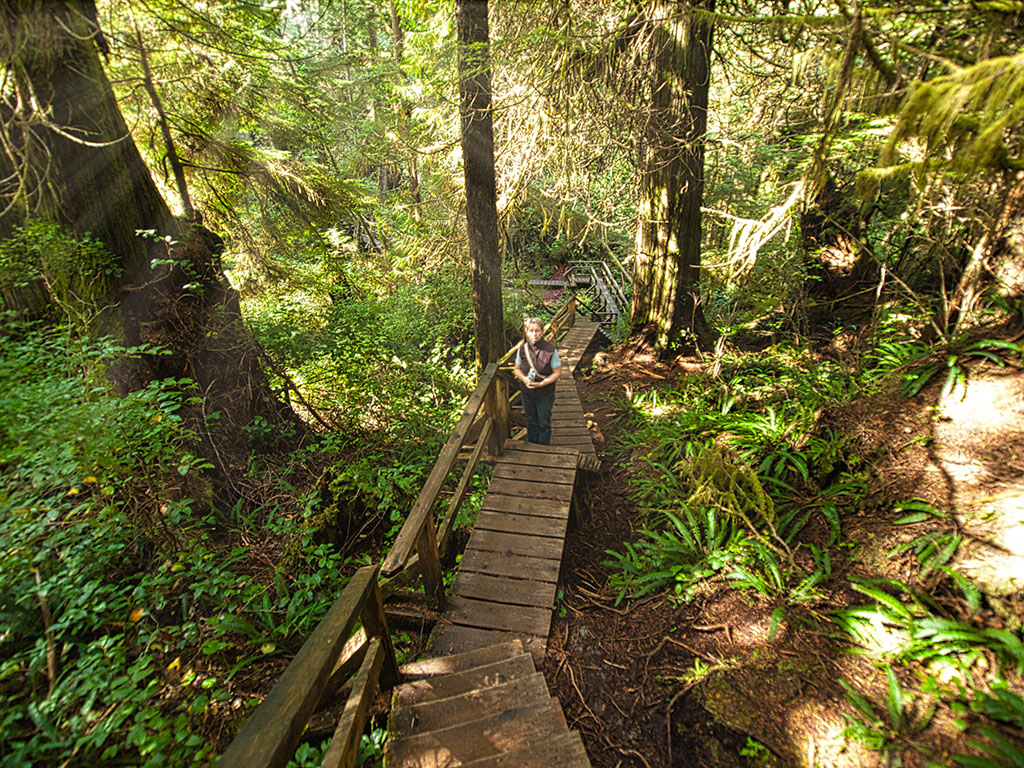Wald im Pacific Rim NP
