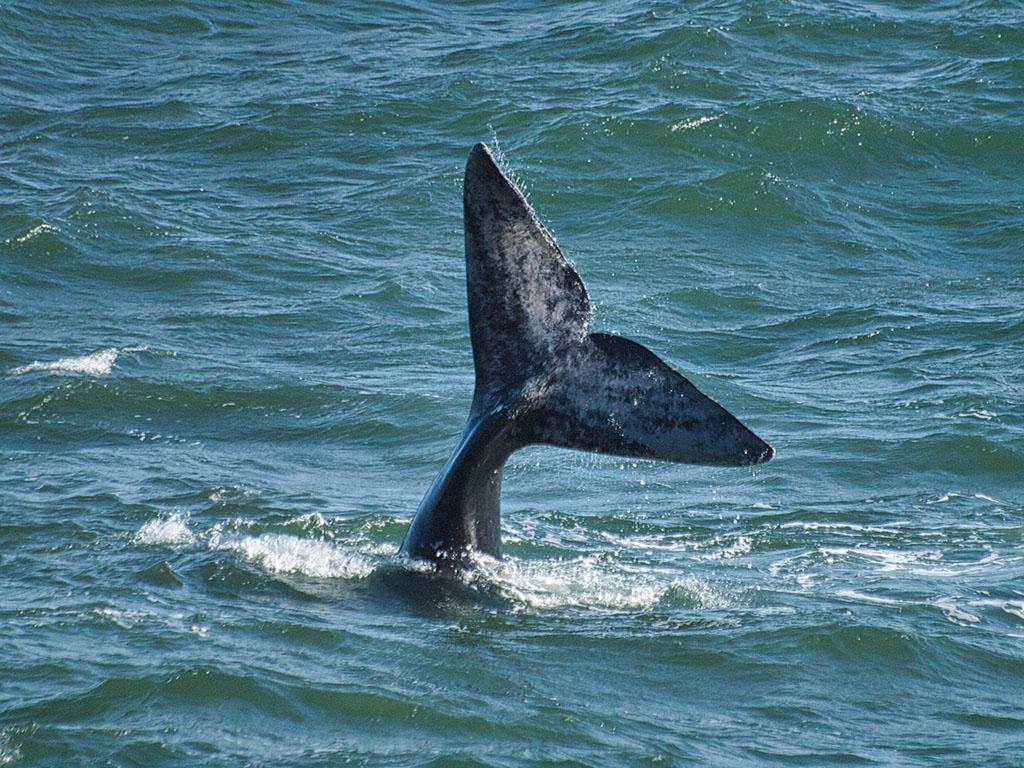 Südafrika Whalewatching