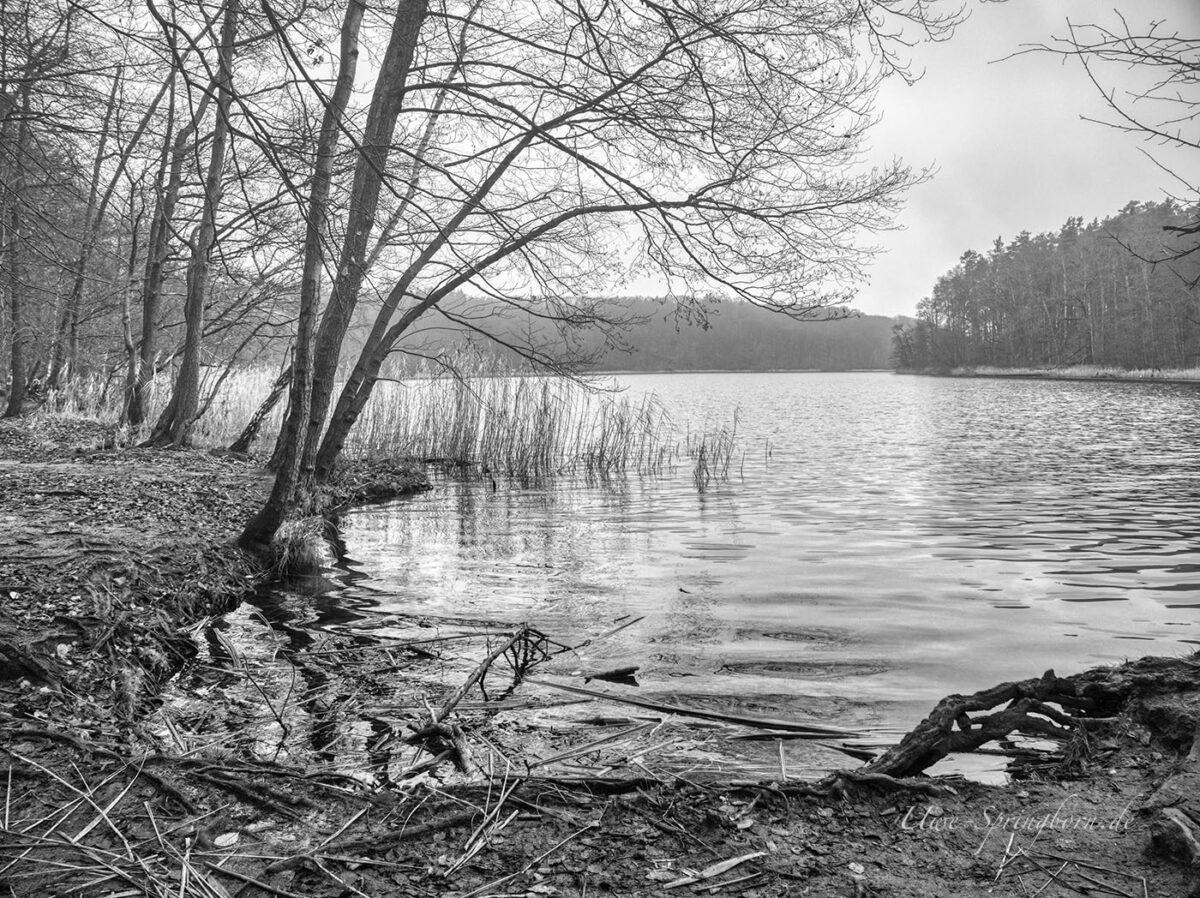 Ufer am Liebnitzsee in schwarz weiß