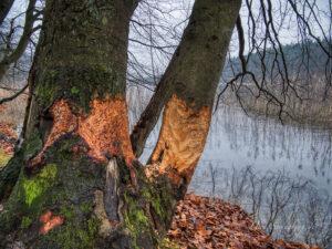 Am Liebnitzsee